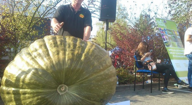 Działkowiec z Raciborza uprawia gigantyczne warzywa