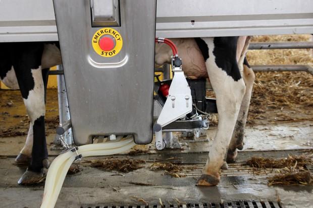 Sztuczna inteligencja w zarządzaniu gospodarstwem mlecznym