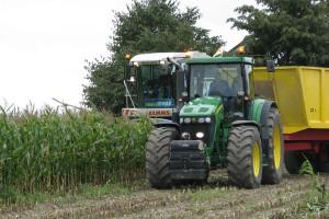 Kukurydza kiszonkowa zwykle nie jest jeszcze dojrzała