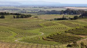 Rekordowe wyniki australijskich rolników
