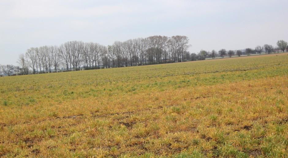 Potencjalne skutki wycofania glifosatu mogą być dotkliwe dla Polski