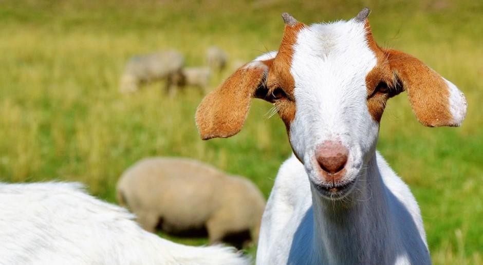 Jakie powierzchnie i ile zwierząt zgłosili rolnicy w tym roku do dopłat ?