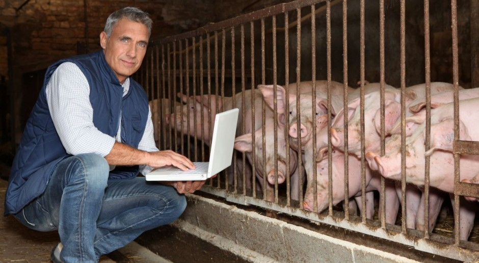 W garniturze do świń?