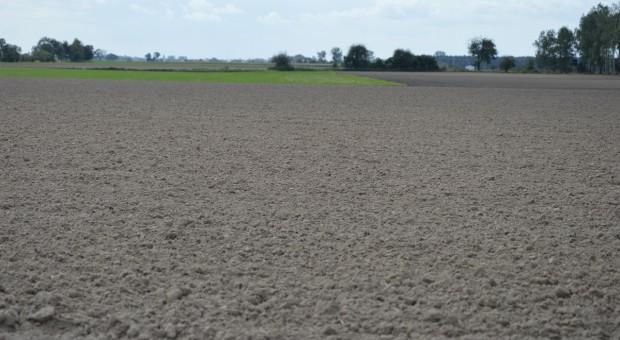 Odchwaszczanie zbóż bezpośrednio po siewie
