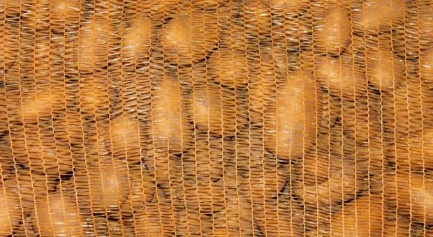 Niemcy: Zbiory ziemniaków przekroczą 11 mln ton