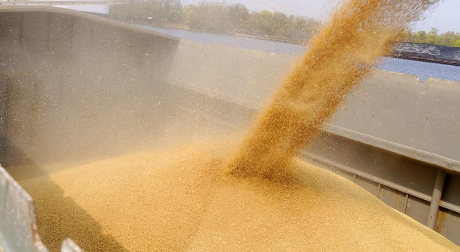 GUS: Tegoroczne zbiory zbóż szacuje się na 32 mln ton