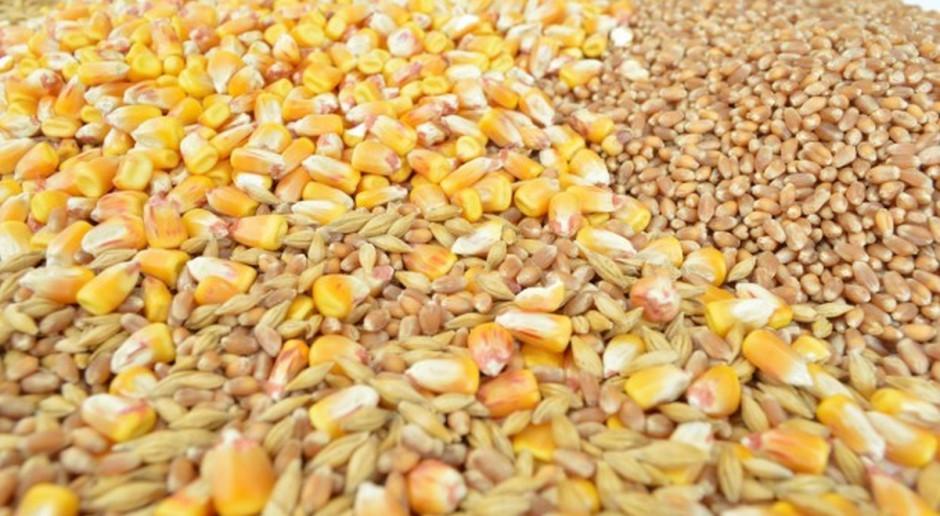 IGC: Wyższa prognoza światowej produkcji zbóż ogółem