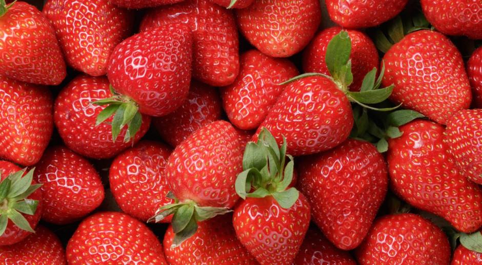 GUS: Gorsze zbiory owoców, warzyw