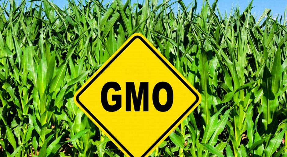 Świdwin: W niedzielę referendum ws. upraw lub hodowli GMO