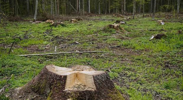 Tragedia przy wycince drzew