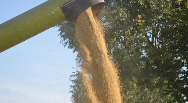 FAO: Światowe zapasy zbóż coraz większe