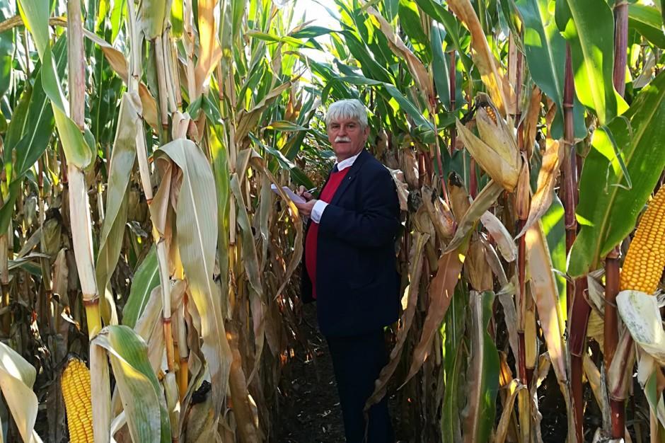 na kukurydzianych poletkach można była spotkać prof. Marka Korbasa- cenionego w kraju fitopatologa. Służbowo wykonywał on swoje obowiązki zawodowe, a dokładniej w celach naukowych oceniał on tegoroczny stopień porażenia roślin kukurydzy chorobami grzybowymi (w Skrzelewie stworzono mu do tego doskonałą okazję); Fot. Anna Kobus