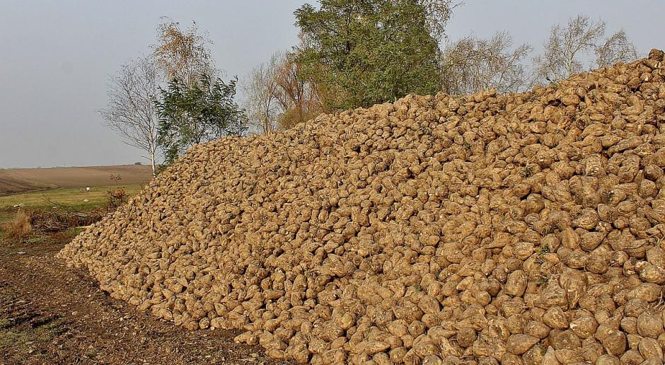 Rosja: Zbiory zbóż zbliżają się do 110 mln ton
