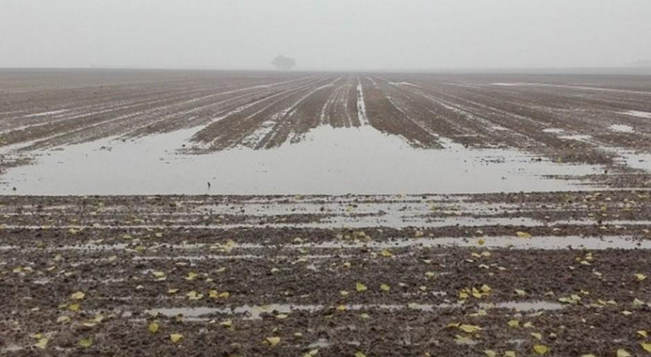 Pogoda znowu utrudnia siewy, najgorzej jest na północy kraju