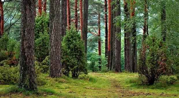 Warmińsko-mazurskie: Ponad 100 pouczeń za wejście do lasu i 8 mandatów za wjazd