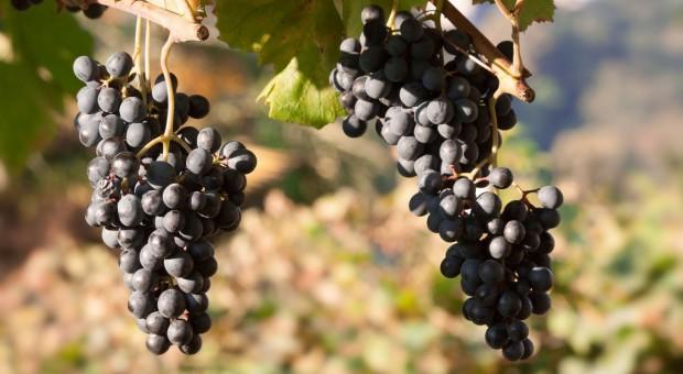 Zezwolenie na zwiększenie naturalnej objętościowej zawartości alkoholu w polskich winach