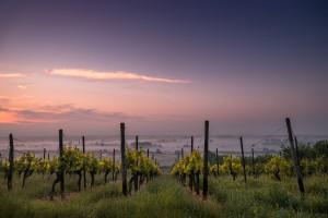 UE: Ekstremalnie niskie zbiory w winnicach