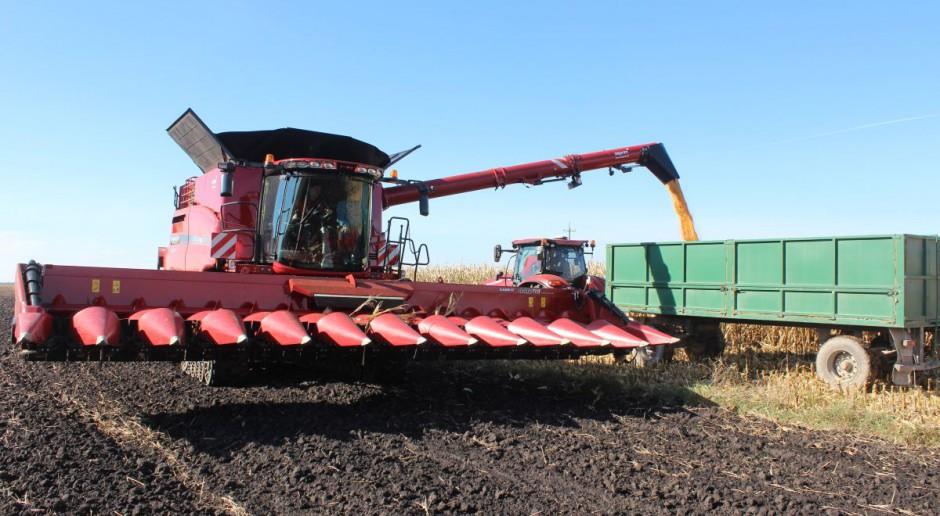 Zbiór kukurydzy na ziarno – ile za usługę?