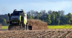 FAO: Lekki wzrost prognozy światowej produkcji zbóż