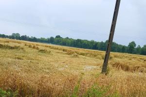 Lipcowe klęski rolników obojętne rządowi