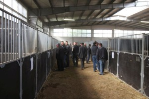 Jak dodają organizatorzy, bardzo pozytywny jest fakt, że na aukcje przyjeżdżają mali hodowcy i producenci, którzy kupują po kilka zwierząt do hodowli oraz na opas fot. PZHiPBM
