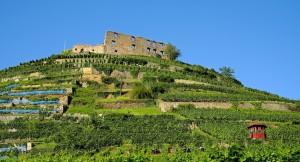 Copa-Cogeca: Wyjątkowo niskie plony winorośli