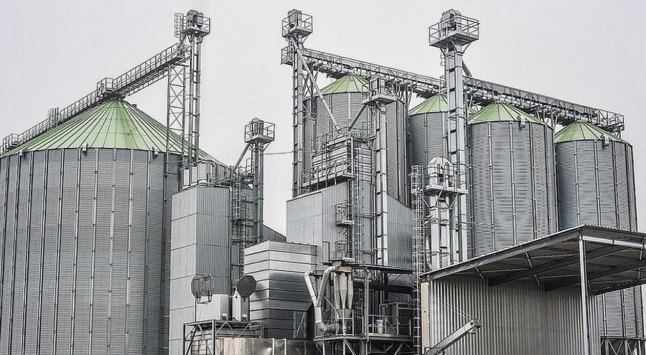 W Feerum już suszą kukurydzę z tegorocznych zbiorów