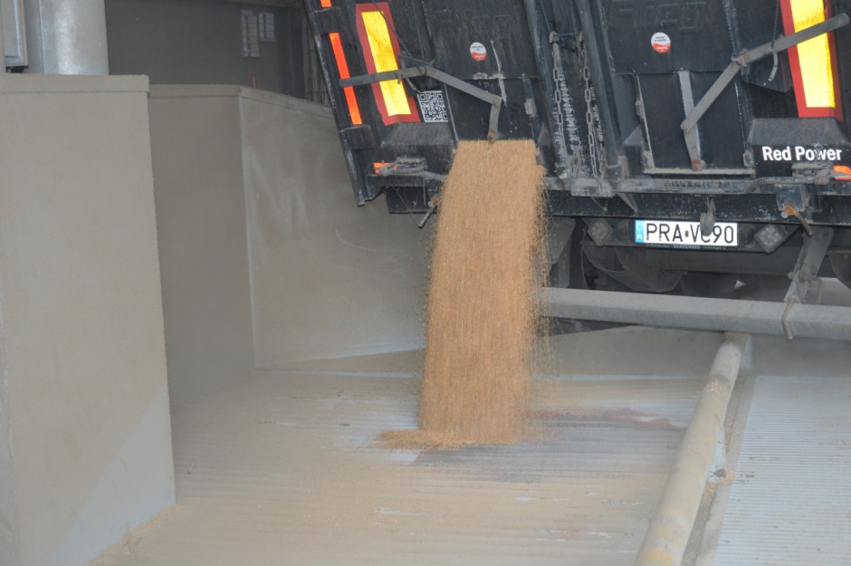 W kolejnym, trzecim kroku jakość produkowanego materiału spada na barki zakładów nasiennych firmy. Surowiec przyjmowany na teren zakładu w Runowie jest wstępnie analizowany pod względem wilgotności, potem podlega pięciostopniowemu czyszczeniu