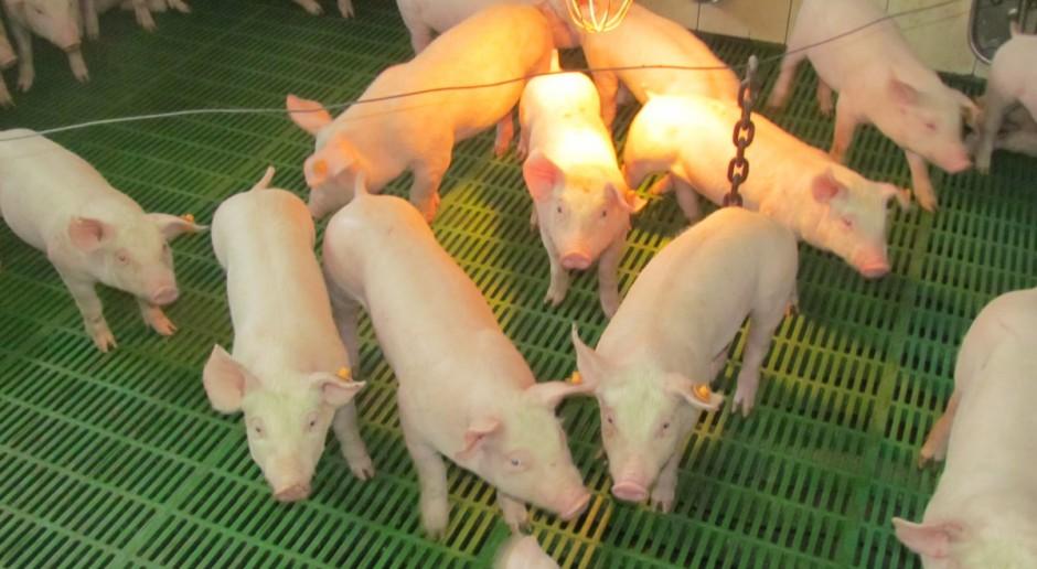 Polska będzie starała się o odroczenia zakazu stosowania leczniczego tlenku cynku w paszach dla świń