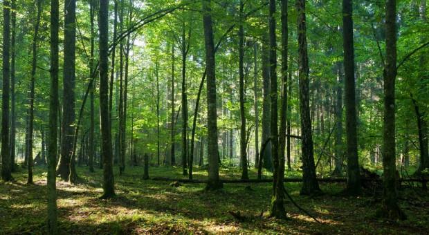Szyszko: Jesteśmy unikatem pod względem bioróżnorodności