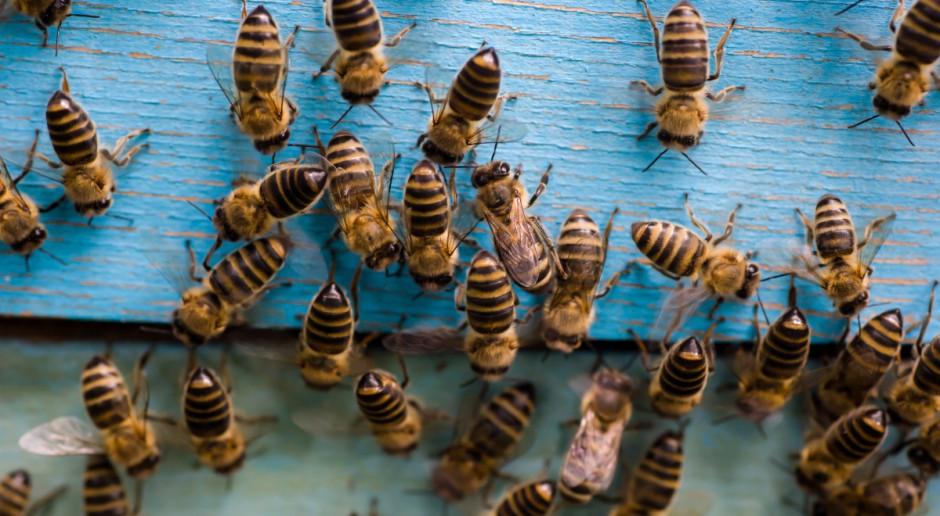 Spolana z grupy Unipetrol ma pszczelą pasiekę