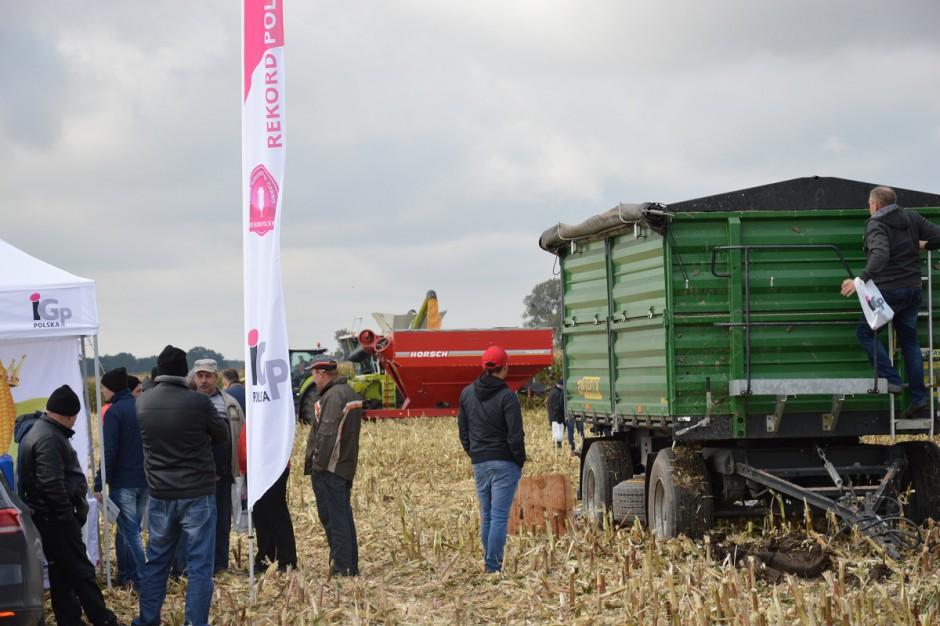 Pierwszy rekord zbioru kukurydzy na ziarno ustanowiono w Gościejewie, na polach gospodarstwa PRU Agrosystem; Fot. Katarzyna Szulc