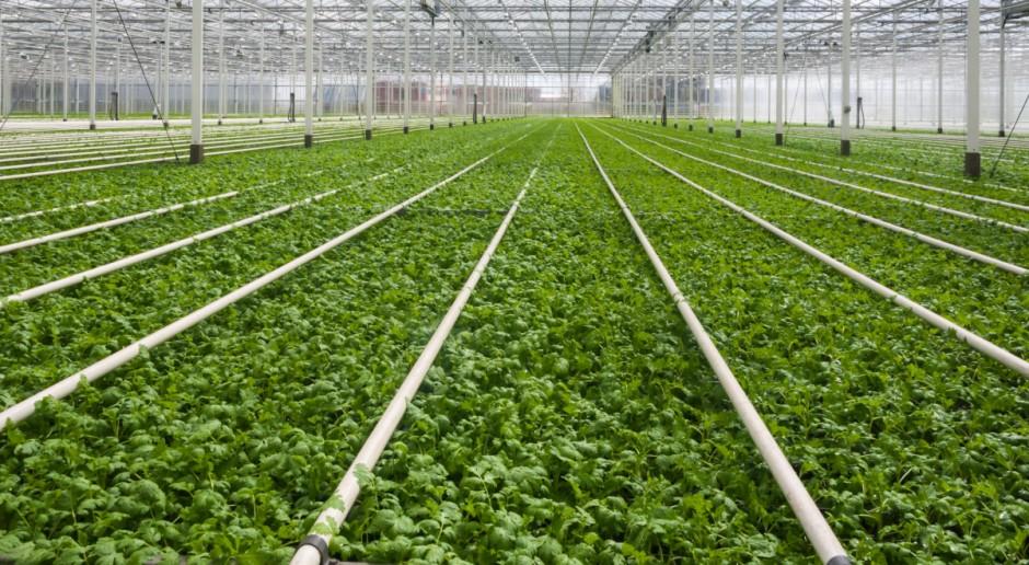 Wzrasta eksport żywności z UE; największym eksporterem Holandia