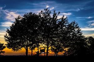 Rolnik nie musi zgadzać się na włączenie ziemi do obwodu łowieckiego