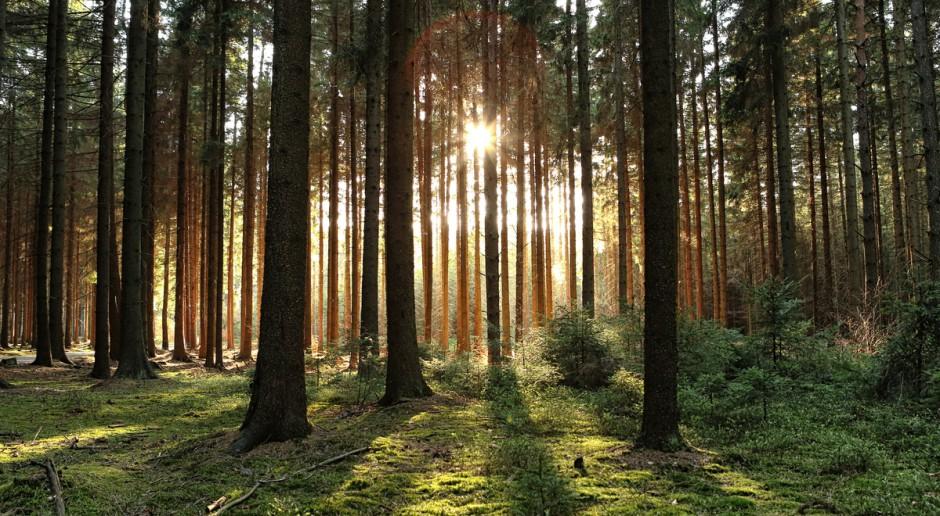 Wiatr rozdmuchał plany Lasów Państwowych