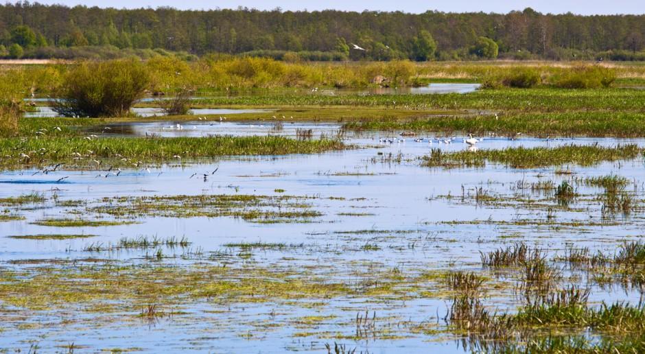 MŚ: Wiele siedlisk Natura 2000 zostało stworzonych przez człowieka