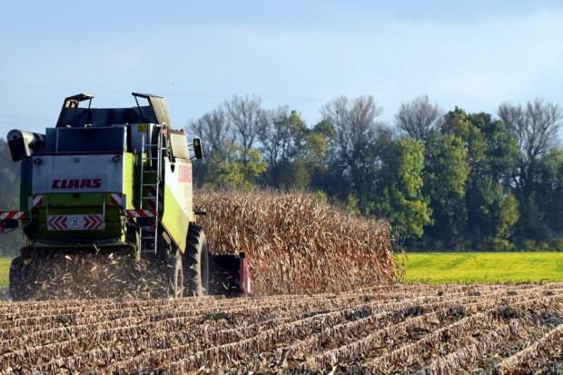 Ukraina: Wyniki zbiorów zbóż