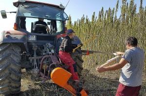 Rolnicy usiłowali zaadaptować kosiarkę listwową do zbioru konopi