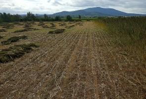 Cześć plantacji zniszczona przez huragan wciąż czeka na wycenę rzeczoznawcy z firmy ubezpieczeniowej