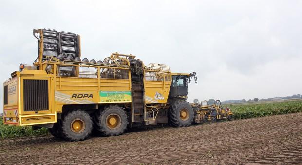 Jak uprawić glebę po zbiorze buraka cukrowego?