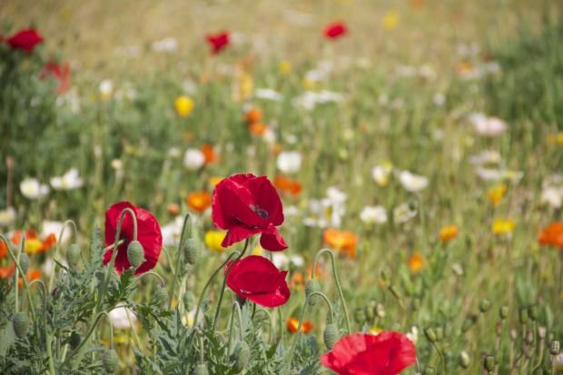 Rumunia: Powstaje bank genów roślinnych