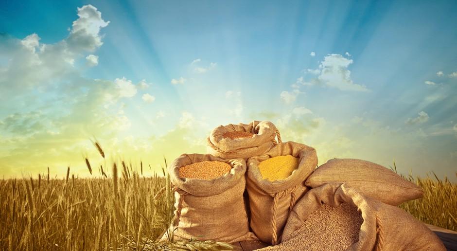 GUS: We wrześniu wzrost cen skupu produktów roślinnych