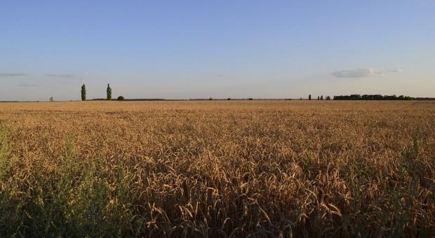 Integracja Ukrainy z UE ważniejsza od polskiego rolnika?
