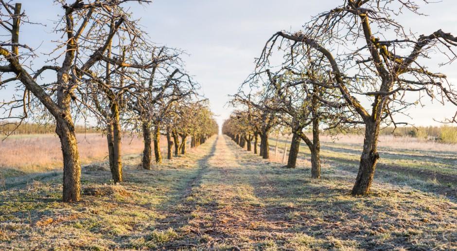 Mazowieckie: Badania ankietowe ws. gatunków i odmian drzew w sadach
