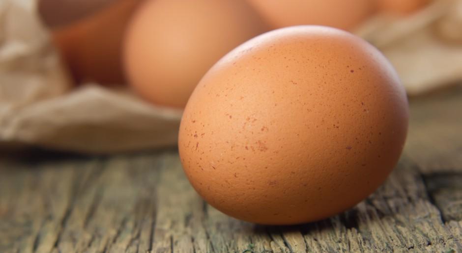 SGGW: Skład jaj zależy od sposobu karmienia, a nie od rodzaju chowu