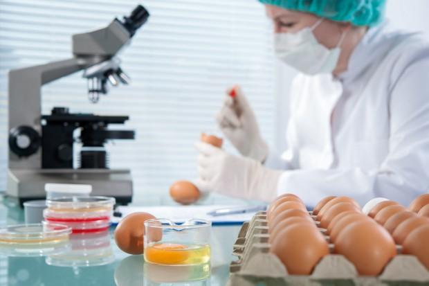 Salmonella staje się coraz większym problemem producentów drobiu