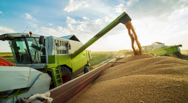 W skupach zbóż stagnacja cenowa