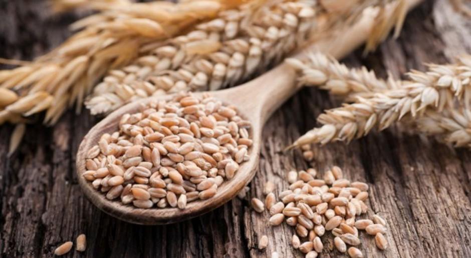 Prognozowany wzrost cen zbóż pod koniec 2017 r.