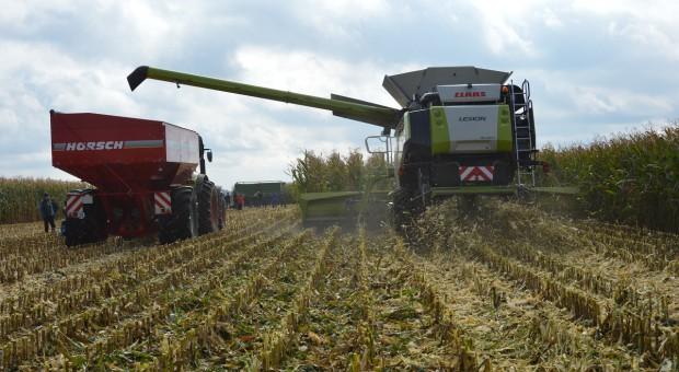 Oficjalny rekord zbioru kukurydzy na ziarno w Polsce