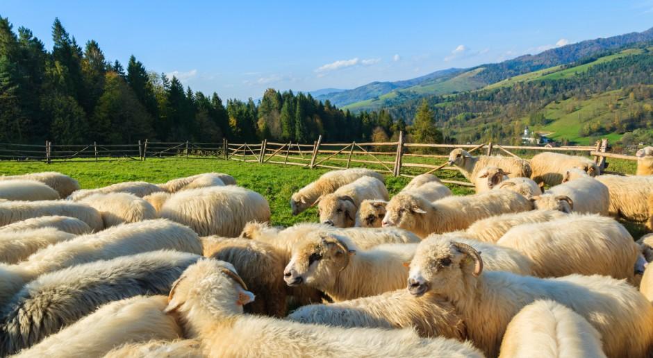 Projekt noweli o organizacji hodowli i rozrodzie zwierząt gospodarskich do dalszych prac